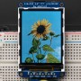 1480sunflower_LRG