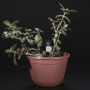 Chirp! The Plant Watering Alarm