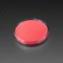 Fluorescent Pigment - Pink